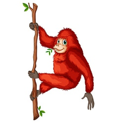 A playful red orangutan vector