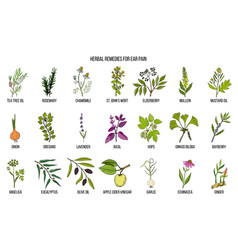 best medicinal herbs for ear pain vector image