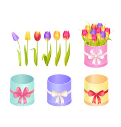boxes and tulips collection vector image