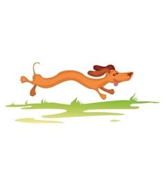 dachshund running vector image