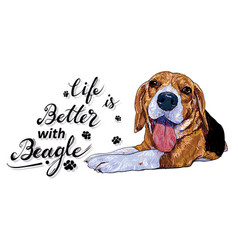 life is better with a beagle dog with text on vector image