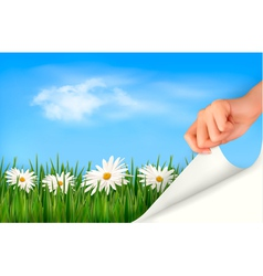 Nature background with green grass daisies and vector image