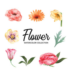 Set watercolor colorful flower and foliage vector