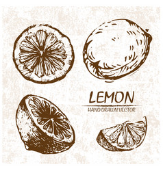digital detailed lemon hand drawn vector image