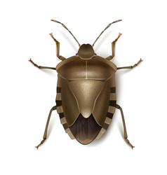 Brown shield bug vector