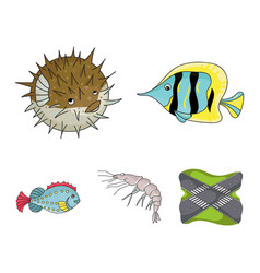 shrimp fish hedgehog and other speciessea vector image