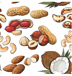 seamless pattern of various nuts on white vector image vector image