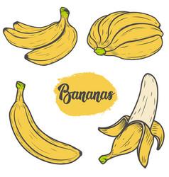 set of colorful hand drawn banana design vector image
