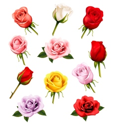 Set of different roses vector image