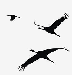 crane pack vector image