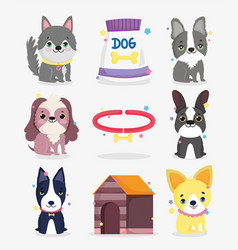 cute little dogs breeds collar dog domestic vector image