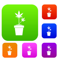 hemp in pot set collection vector image