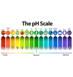 Ph scale on white background vector