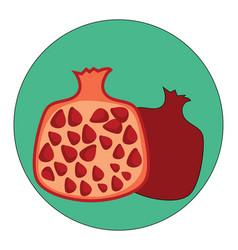 pomegranate fruit on white background vector image