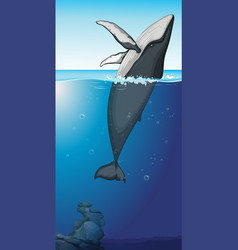 a humpback whale in ocean vector image