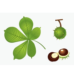 Chestnut set vector