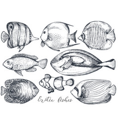collection of hand drawn exotic fishes vector image
