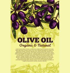olive oil black olives sketch poster vector image
