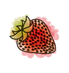 watercolor drawing of strawberry fruit vector image