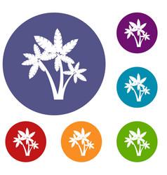 Three palm trees icons set vector