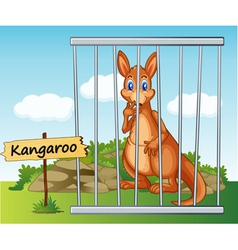 Cartoon zoo kangaroo vector