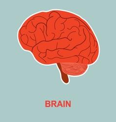 Human brain anatomy vector image