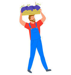 Man carrying wooden container bunches grapes vector