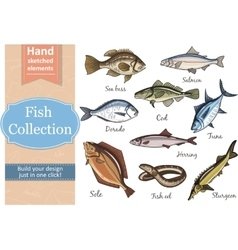 Fish collection Dorado Eel Tuna Salmon Halibut vector