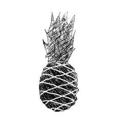grunge pineapple hand drawn vector image