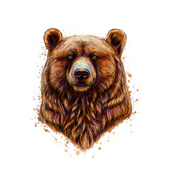 portrait of a brown bear head from a splash of vector image