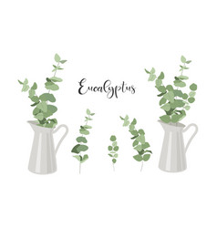 set isolated eucalyptus branches with leaves vector image