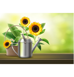 watering can and sunflowers vector image