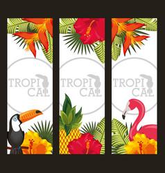 set tropical flower leaves animal card vector image