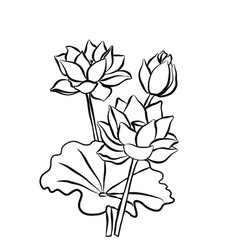 beautiful lotus flowers black white isolated vector image