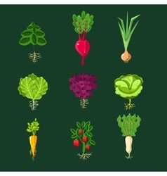 Fresh vegetable plants with roots set vector