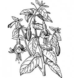 fuchsia vector image