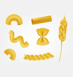 Pasta types and forms realistic set vector