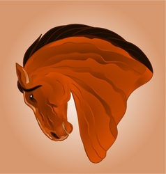 The head of light brown stallion horse vector image