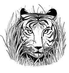 Black and white sketch of a tigers face vector image vector image