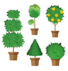 set of street trees and shrubs in pots vector image