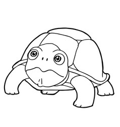 Cartoon cute turtle coloring page vector