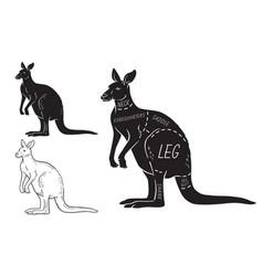 Cut of kangaroo set poster butcher diagram vector