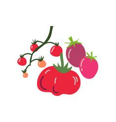different tomato varieties fresh vegetable vector image