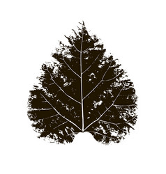 leaf print vector image