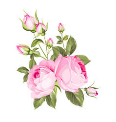 spring flowers bouquet vector image