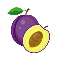 whole violet plum and half plum slice vector image