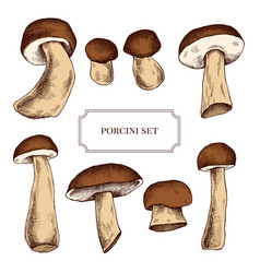 collection of hand drawn mushrooms highly vector image