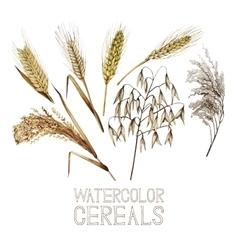 Collection watercolor cereals vector