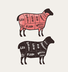 cut meat lamb poster butcher diagram and vector image