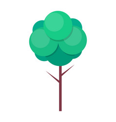 green tree with thin trunk and green leaves vector image